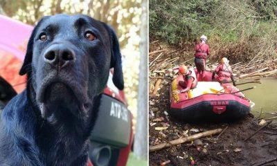 Corpo do cachorro Barney é encontrado