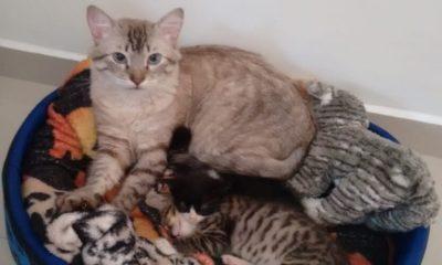 Gato abrigou mais de 10 filhotes de rua em Jundiaí