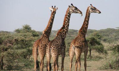 ONGs lutam há dois anos para incluir a espécie na lista de extinção (Foto: Pixabay)